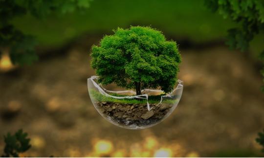 Кабинет биологии и экологии